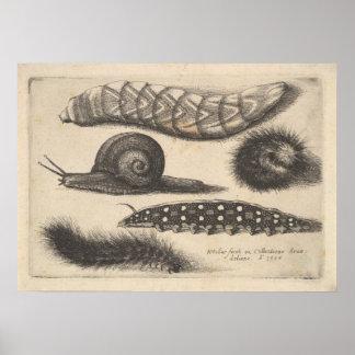 Poster Copie vintage de nature d'insecte d'escargot de