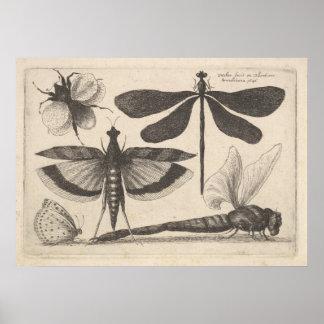 Poster Copie vintage d'entomologie d'insecte d'abeille de