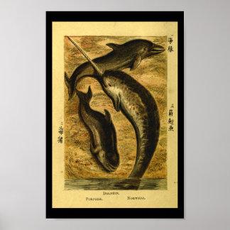Poster Copie vintage d'histoire naturelle de baleine de