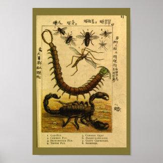Poster Copie vintage d'histoire naturelle d'insectes de