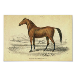 Poster Copie vintage Filley de cheval