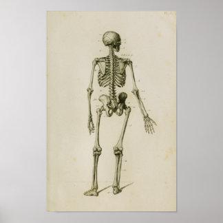 Poster Copie vintage postérieure squelettique humaine