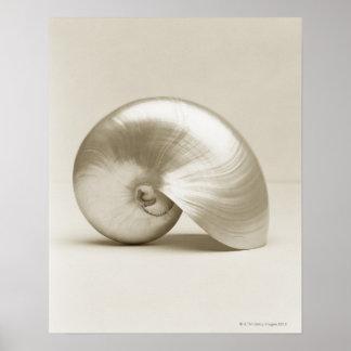 Poster Coquillage de Nautilus de perle
