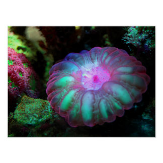 Poster Corail sous-marin rougeoyant
