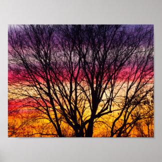 Poster Coucher du soleil coloré avec un arbre silhouetté,