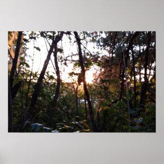 Poster Coucher du soleil dans les arbres