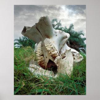 Poster Crâne d'éléphant