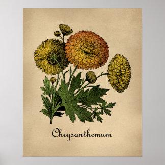 Poster Cru de chrysanthèmes botanique