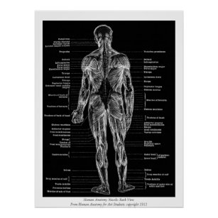 posters affiches diagramme de corps humain. Black Bedroom Furniture Sets. Home Design Ideas