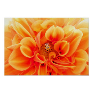 Poster Dahlia et coccinelle oranges
