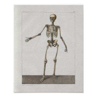 Poster D'anatomie vintage squelettique de 1867 copie