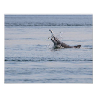 Poster dauphin de bottlenose mangeant un saumon