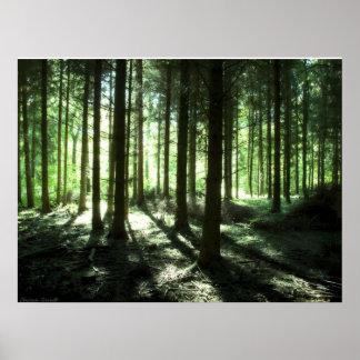 Poster Deep Forest