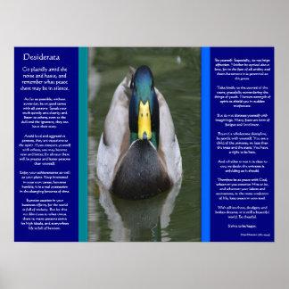 Poster DESIDERATA regardant des affiches de canard