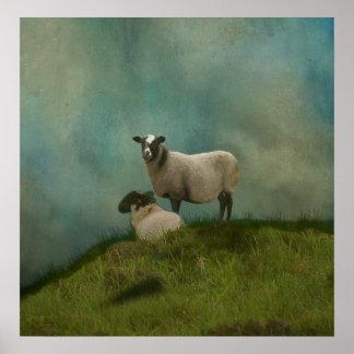 Poster deux moutons dans le domaine