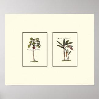 Poster Deux palmiers encadrés par miniature