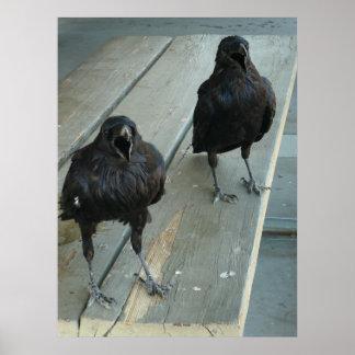 Poster Deux Ravens croassant sur une affiche extérieure