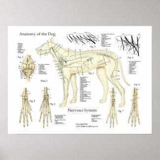 Poster Diagramme d'affiche d'anatomie de système nerveux