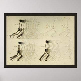 Poster Diagramme de marche de chiropractie d'épine de