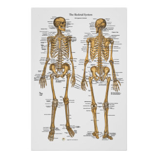 Poster Diagramme de système squelettique humain avec des