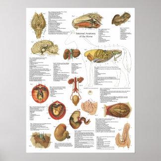 Poster Diagramme d'estomac de cerveau d'anatomie