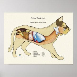Poster Diagramme digestif interne de vétérinaire
