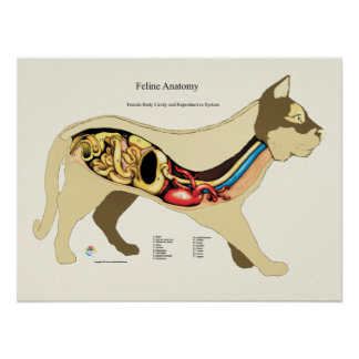 Poster Diagramme femelle interne de vétérinaire