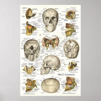 Poster Diagramme humain 24 x 36 d'anatomie de crâne