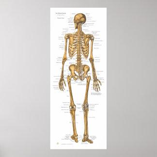 Poster Diagramme humain d'anatomie de système cadre