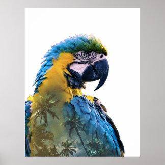 Poster Double exposition de perroquet