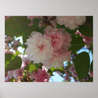 Poster Double ressort se développant du cerisier I floral