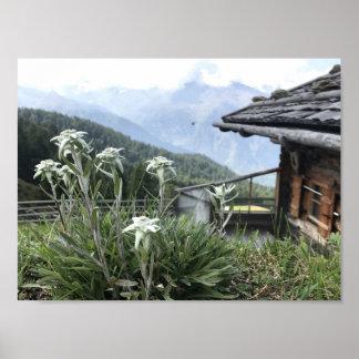 Poster Edelweiss avec le paysage de Tyrolian des Alpes