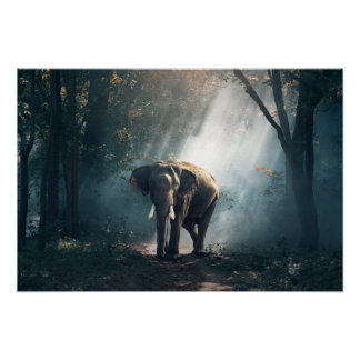 Poster elephant-1822636