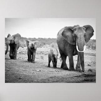 Poster Éléphant africain et veaux | Kenya, Afrique