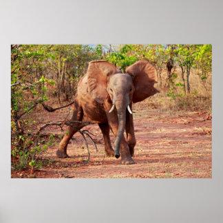 Poster Éléphant dans la pose d'avertissement