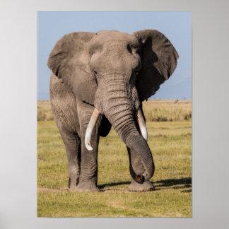 Poster Éléphant dans une pose agressive