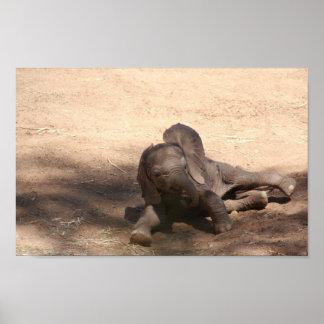 Poster Éléphant de bébé