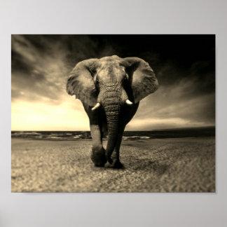Poster Éléphant de Taureau sauvage majestueux dans la