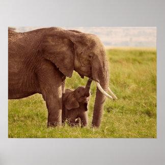 Poster Éléphant et bébé des images | de Getty
