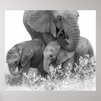Poster Éléphant et deux veaux | Samburu