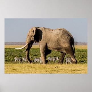 Poster Éléphant et zèbres au point d'eau