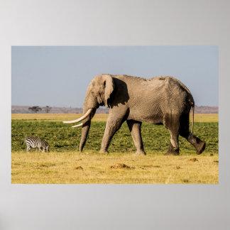 Poster Éléphant marchant par un point d'eau