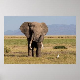 Poster Éléphant ondulant son tronc
