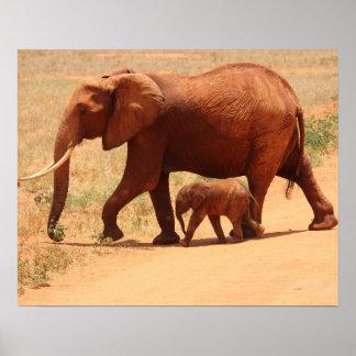 Poster Éléphants