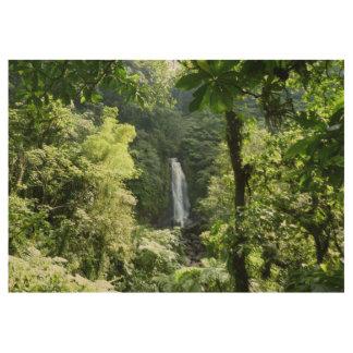 Poster En Bois Trafalgar tombe photographie tropicale de forêt