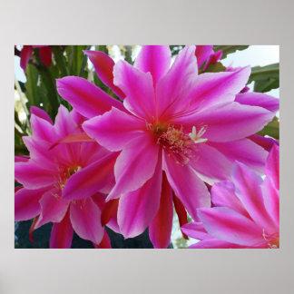 Poster Epiphyllum