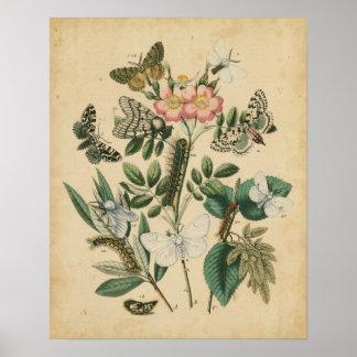 Poster Étapes de la vie de papillon par le studio de