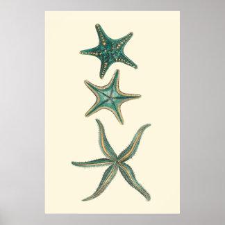 Poster Étoiles de mer triples bleu vert