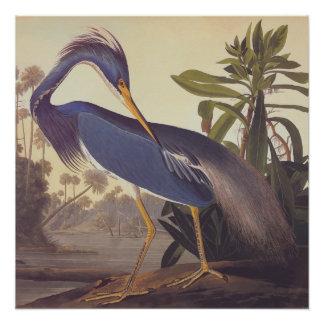 Poster Ex-libris vintage d'art d'Audubon de héron de la