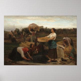 Poster Femmes rurales moissonnant la graine de colza par